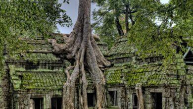 Restoring the Ancient Angkor Wat 1200x800