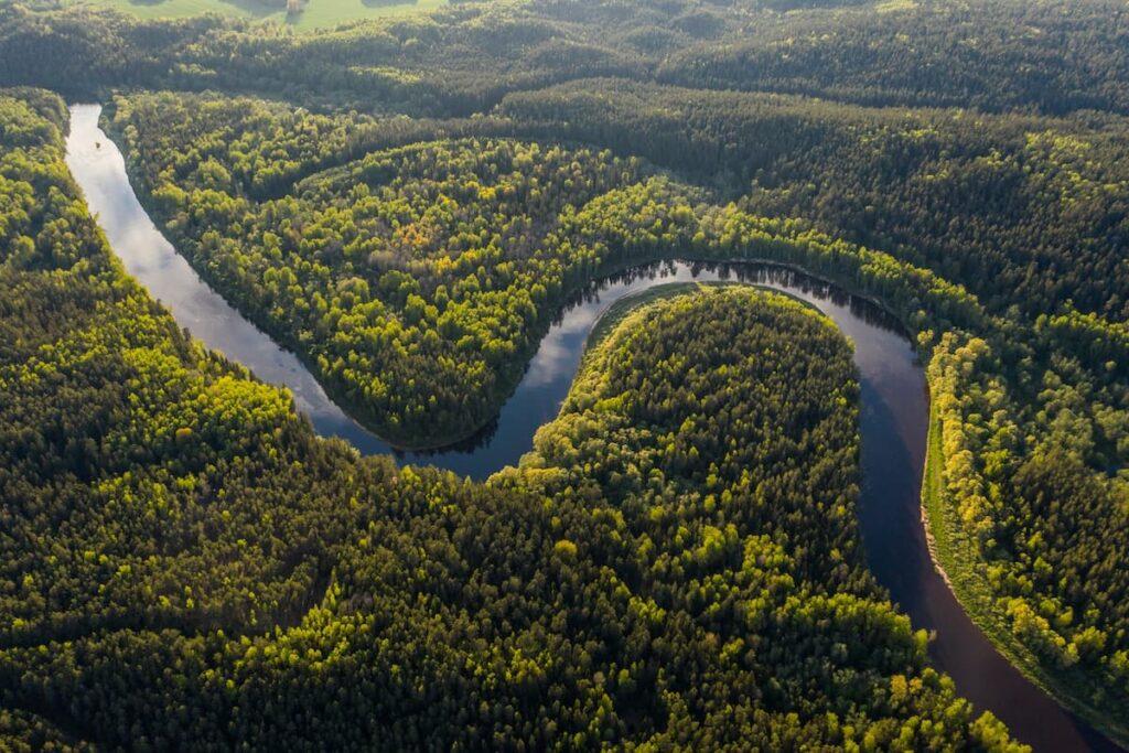 The Amazon Rainforest 1200x800