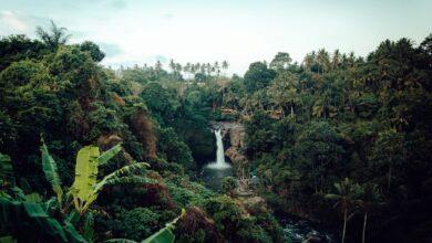 Regrowing the Amazon
