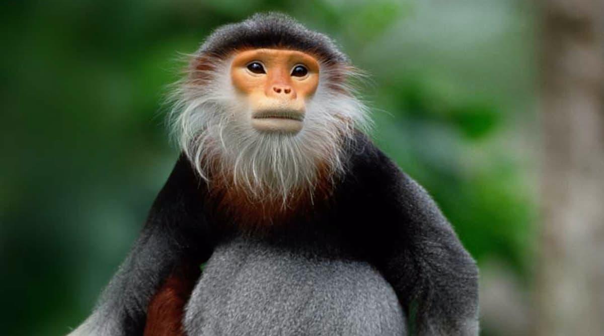 The World's Most Beautiful Monkey