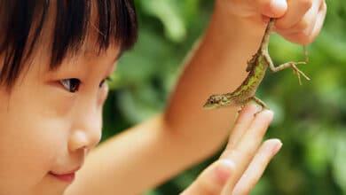 smallest reptile