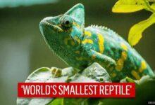 nano-chameleon's