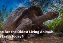 oldest-animals-giant-tortoise